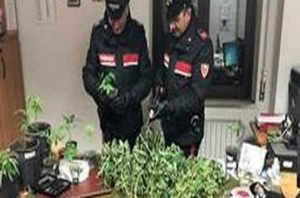 piante di marijuana aversa arrestato caserta